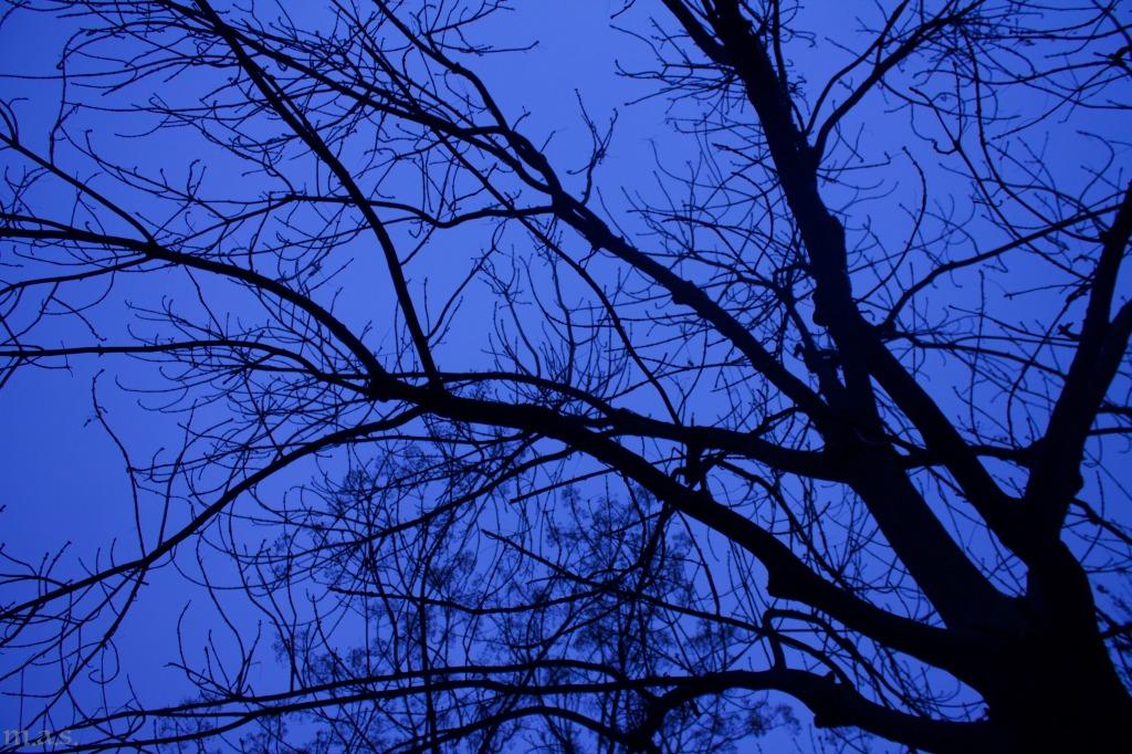 sottol'albero.jpg